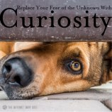 Replace-Fear-With-Curiosity-Meme