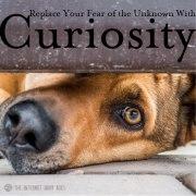 Replace-Fear-With-Curiosity-Meme